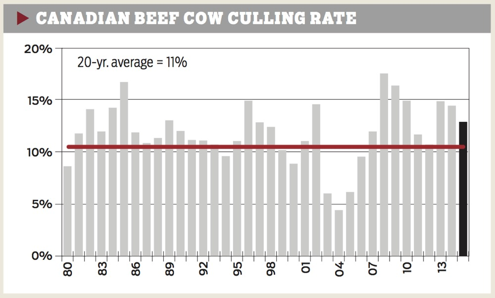 canadian-beef-cow-culling-rate