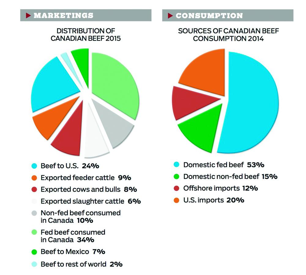 beef-marketing-consumption