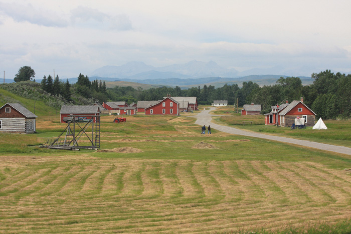 cattle farm ranch