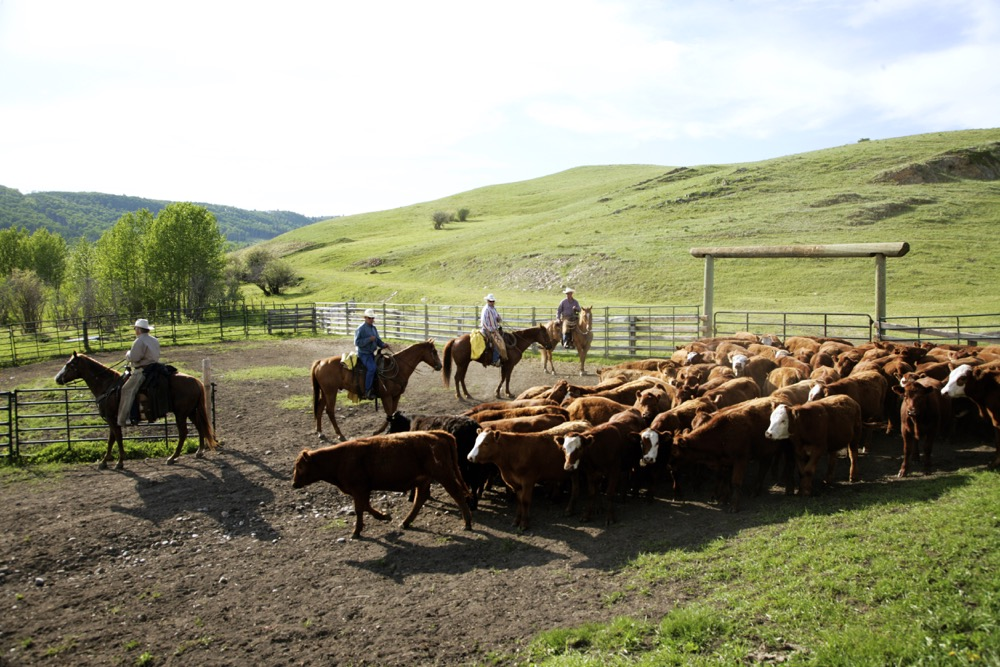 The animal care model is tied very closely to the requirements of the new Beef Cattle Code of Practice.