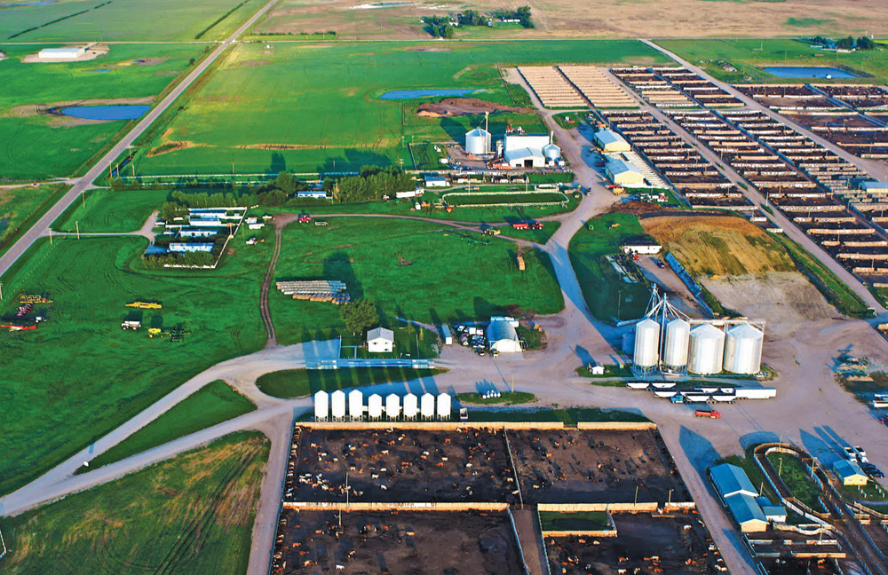 Cattleland's 25,000-head lot now includes a 10,000-head restricted-access section for natual beef while a leased yard nearby is designed for EU cattle.