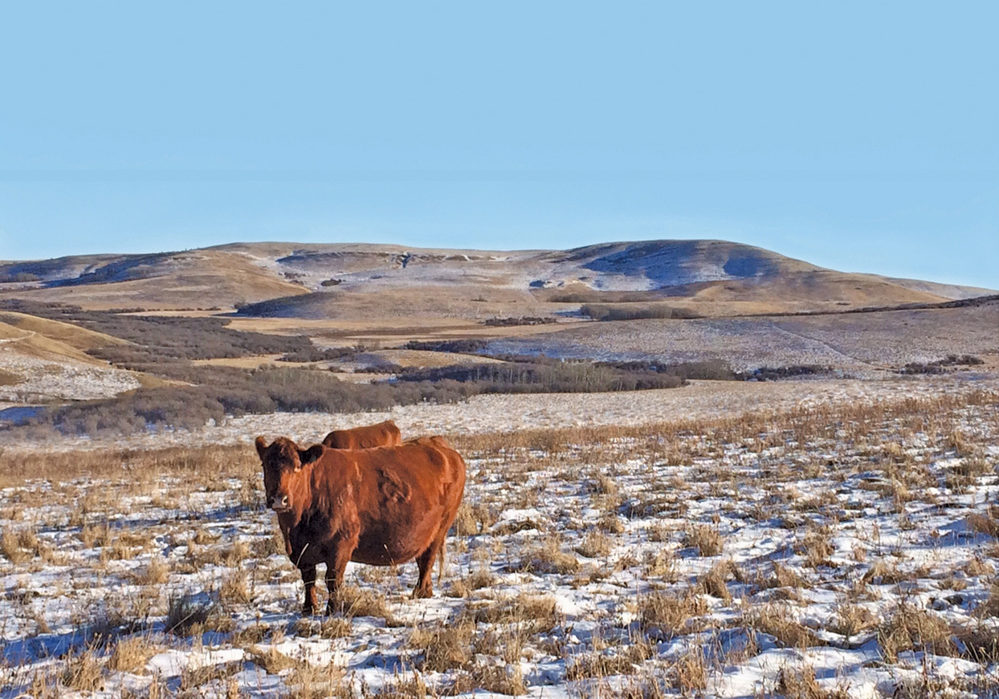 All in on year-round grazing
