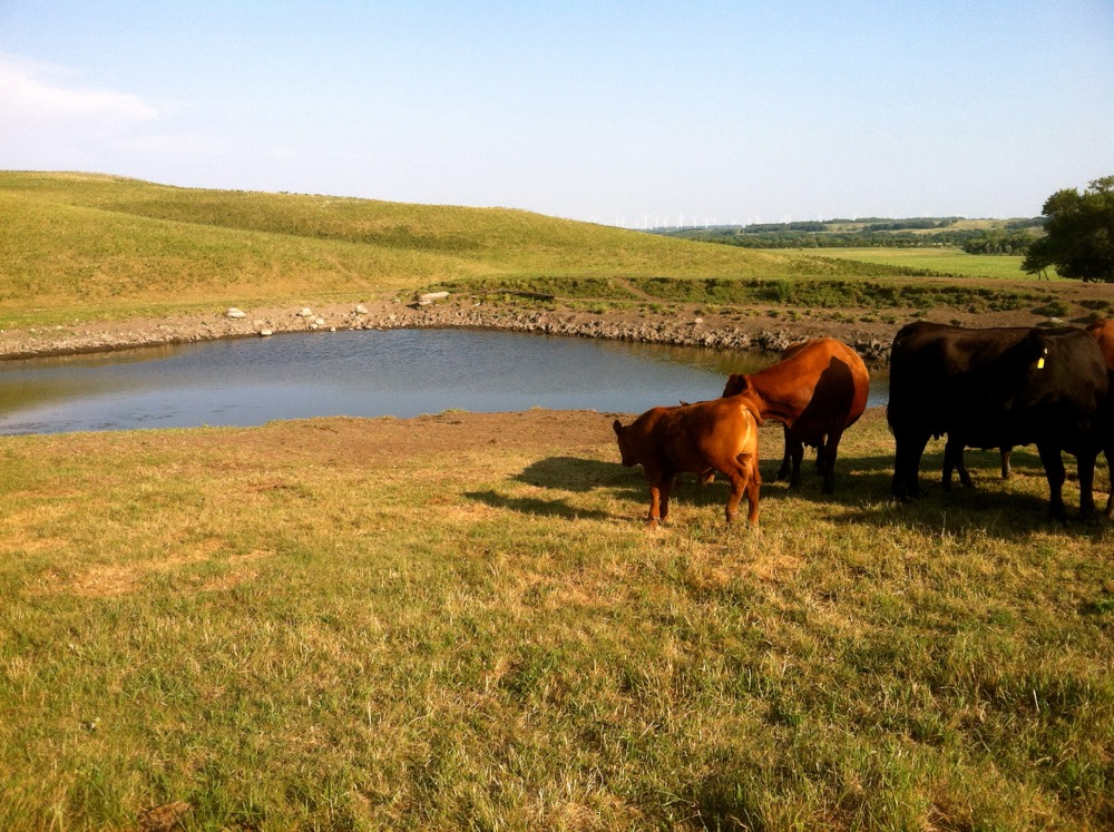 Test the quality of the water in ponds and other water sources before turning livestock out to pasture this year.