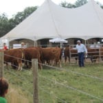 Low-stress cattle handling instruction with Dylan Biggs.