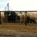 Brazil looking to open Canadian, Saudi Arabian fresh beef markets