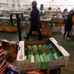 Boxes of asparagus are seen at Cobrey Farm in Ross-on-Wye, Britain on March 11, 2019. (Photo: Reuters/Peter Nicholls)
