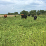 Electric fencing can be an effective way to give pastures or cells a break between grazing.