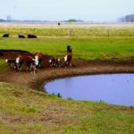 Keep an eye on water quality for cattle during drought