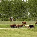 Cattle producers step in to replace Saskatchewan's livestock loan guarantee program