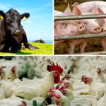 Kay: Price reporting invaluable to livestock and meat industries