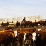 Soft beef demand outlook for September and October