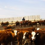 Canada's beef industry has worked long and hard to help get an integrated on-farm surveillance program for antimicrobial resistance underway in the feedlot sector.