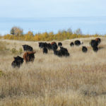 Young cattle producers managing risk on the ranch