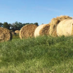 Hay is likely to be expensive in many areas this year due to weather.