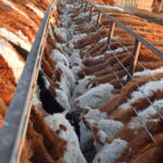 Softer steel cables fence off the trough and stretch without snapping.