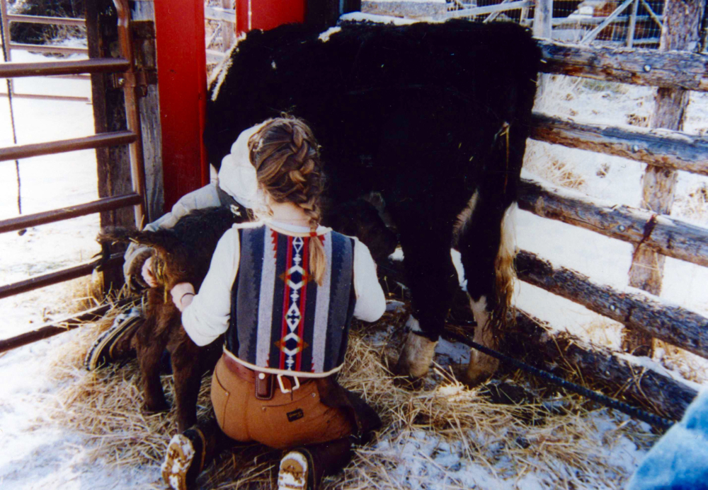 By restraining the cow, the substitute calf can nurse without being kicked, stimulating milk let-down.