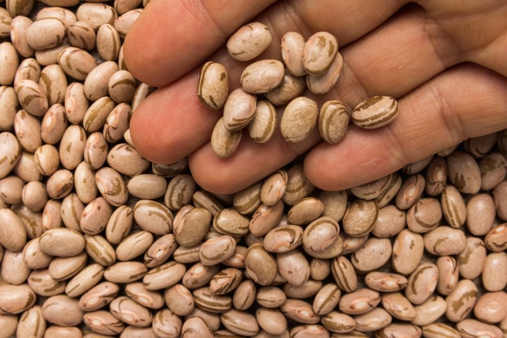Pinto beans. (Vergani_Fotografia/iStock/Getty Images)