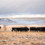 Market research reveals opportunity to educate U.S. beef consumers