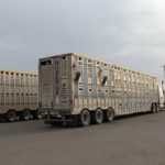 Cattle liners sit empty in a Red Deer parking lot in April 2020.