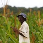 A farmer walks through a field of maize near Chikuni in the south of Zambia on Feb. 21, 2015. (Photo: Reuters/Darrin Zammit Lupi)
