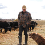 Making genomics work for commercial cattle herds
