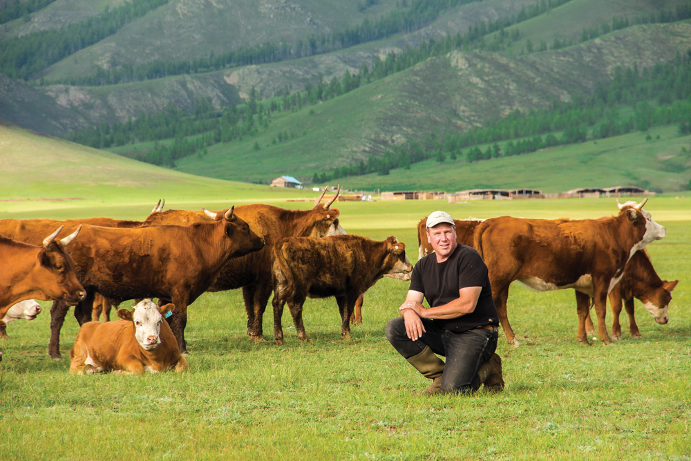 Hereford genetics were introduced to Mongolia's Bulgan and Selenge provinces from Russia in the 1950s. The breed did well, but the cattle industry declined after the Soviet Union fell and state-run farms closed.