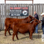 Livestock shows and cattle awards