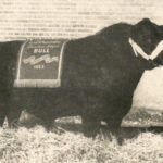 History: Calgary Bull Sale Still Great