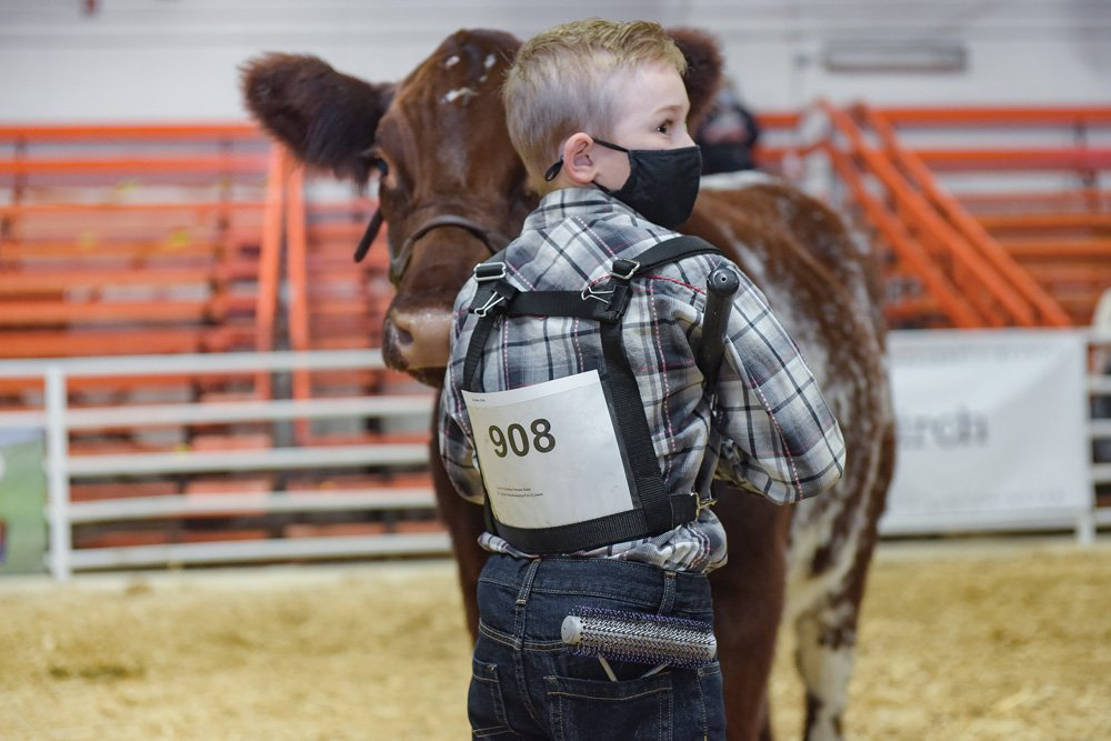 Ten-year-old Lincoln Graham dons a mask while showing at the Lloydminster Stockade Roundup. Show organizers decided to hold Roundup in person this past November, with protocols in place.