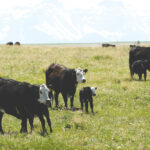 The economics of livestock and grass