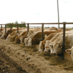 McMillin: Fed cattle prices slowly improving