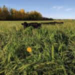 Regeneratively grazing recycles nutrients to the soil.