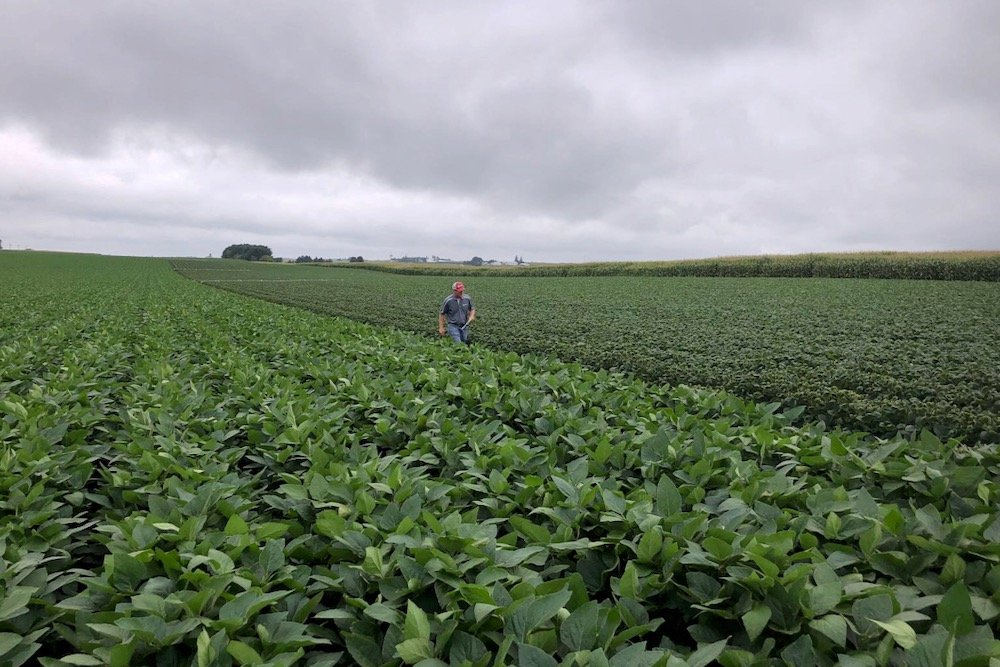 Soybean fields are inspected in a University of Wisconsin research trial on dicamba drift at Arlington, Wisc. on Aug. 2, 2018. (File photo: Reuters/Tom Polansek)