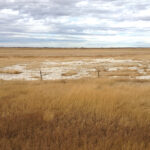 Managing soil salinity for the long haul
