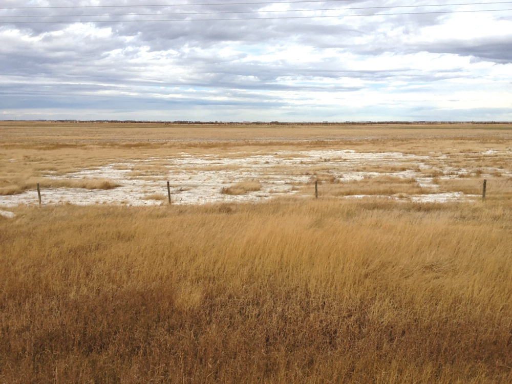 Salinity in central Saskatchewan, just off Highway 15.